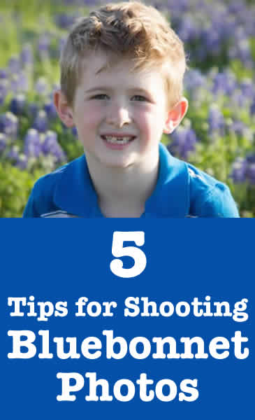 tips shooting bluebonnet photos