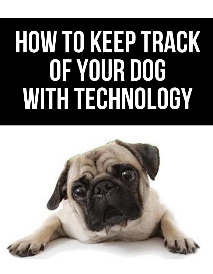 Keep track of your dog with technology